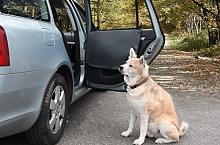 Doplňky pro převoz psů